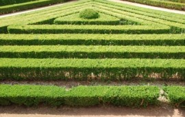 Perfectly Straight Hedges