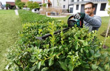 Handling the Bosch AHS 50-20 Cordless Hedge Trimmer effortlessly