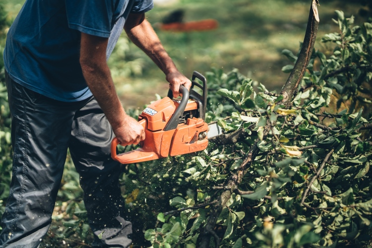 Chainsaw for Hedge Cutting
