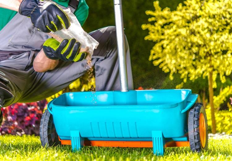 Applying Fertilizer to Lawn