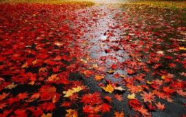 Wet Leaves on Ground