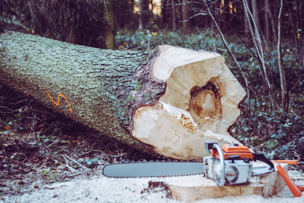 cutting down a tree with a chainsaw
