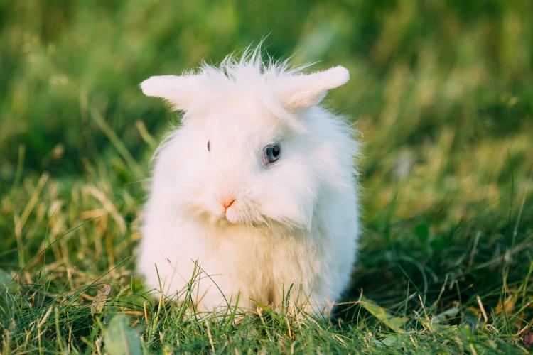 Cute rabbit sitting on lawn