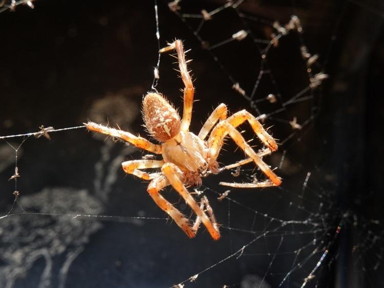 Spider sitting on spun web