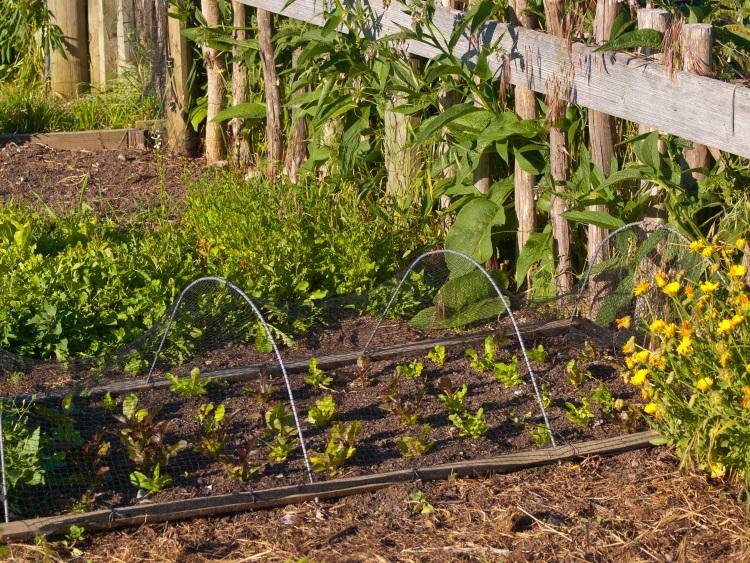 view of a vegetable garden