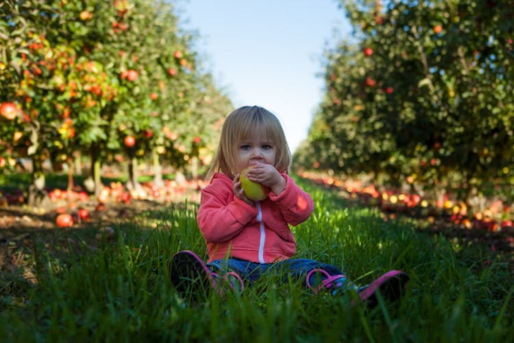 Girl eating apple in fruit tree garden