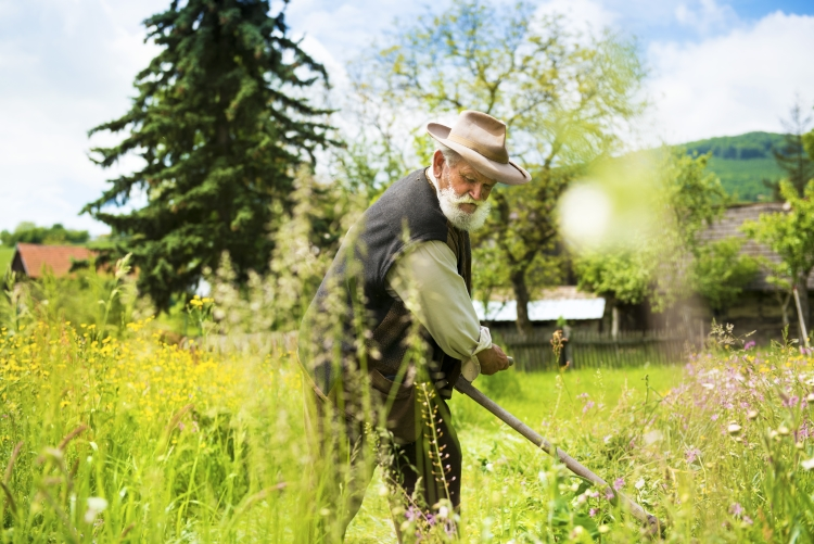 Old man gardening with scythe