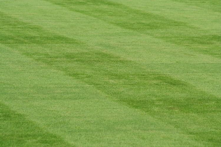 Lusciously striped lawn