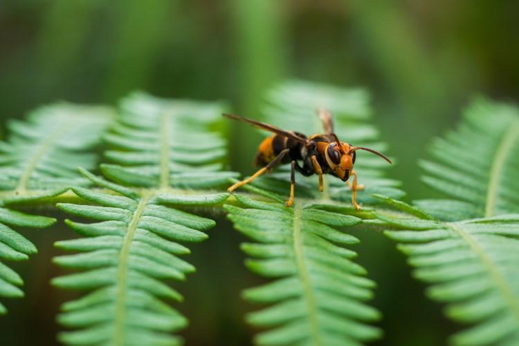 Wasp sitting on leaf