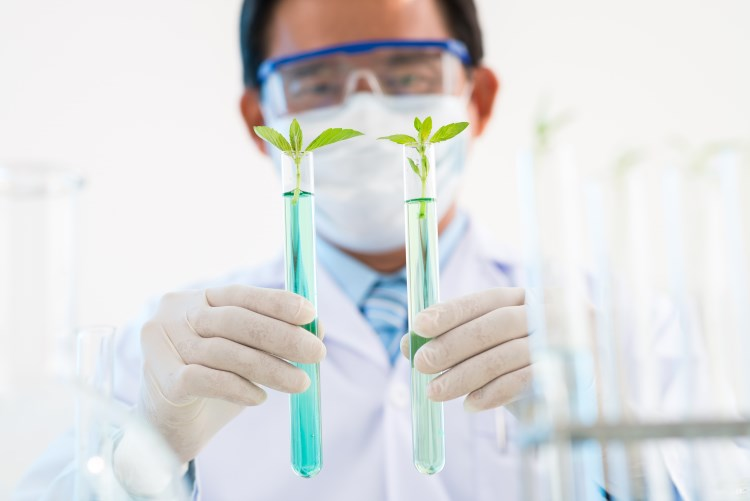 Man holding GMO crops