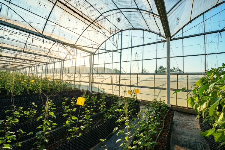 Beautiful Vegetable Greenhouse
