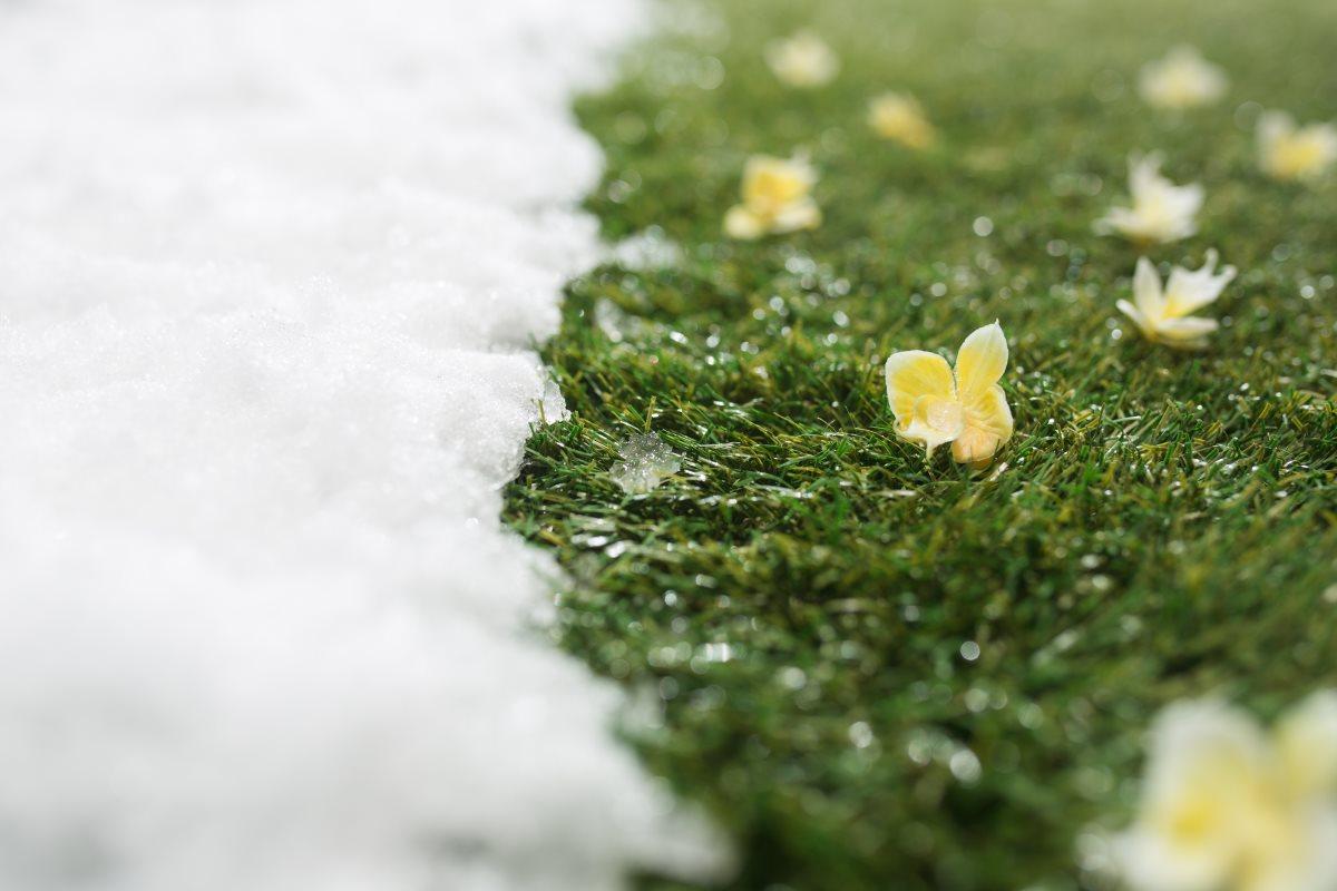 Melting Snow on Grass