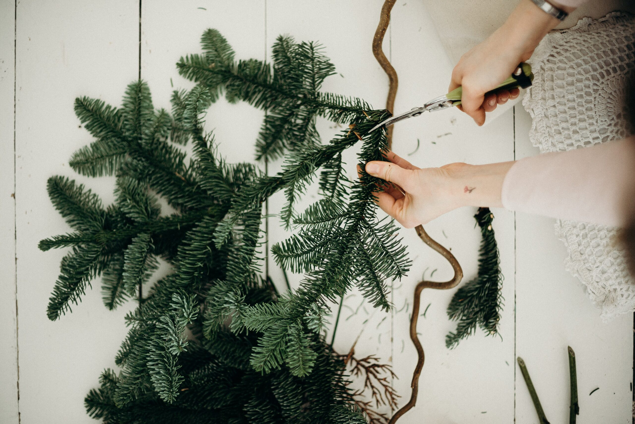 Best Practices for Growing Your Own Christmas Tree