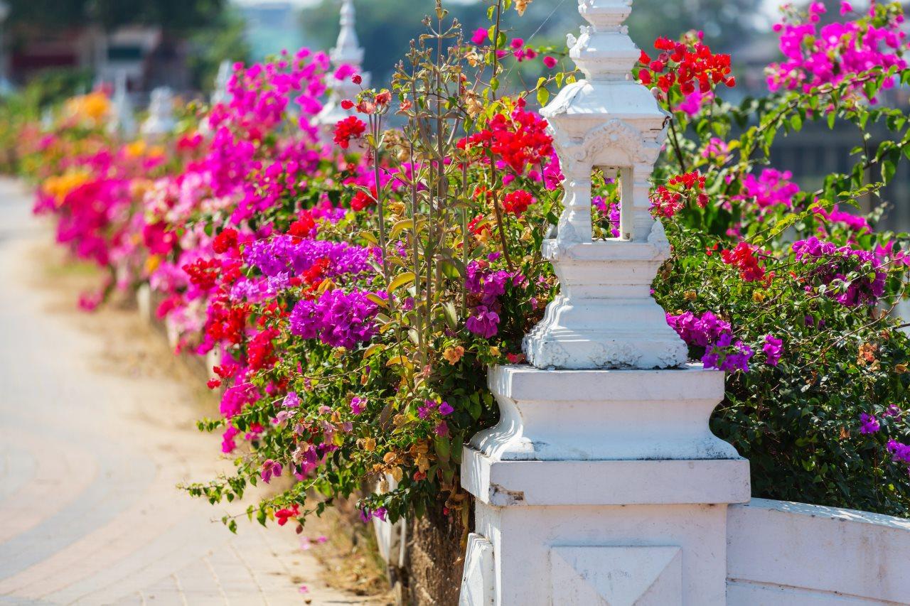 Beautiful Colours in Garden