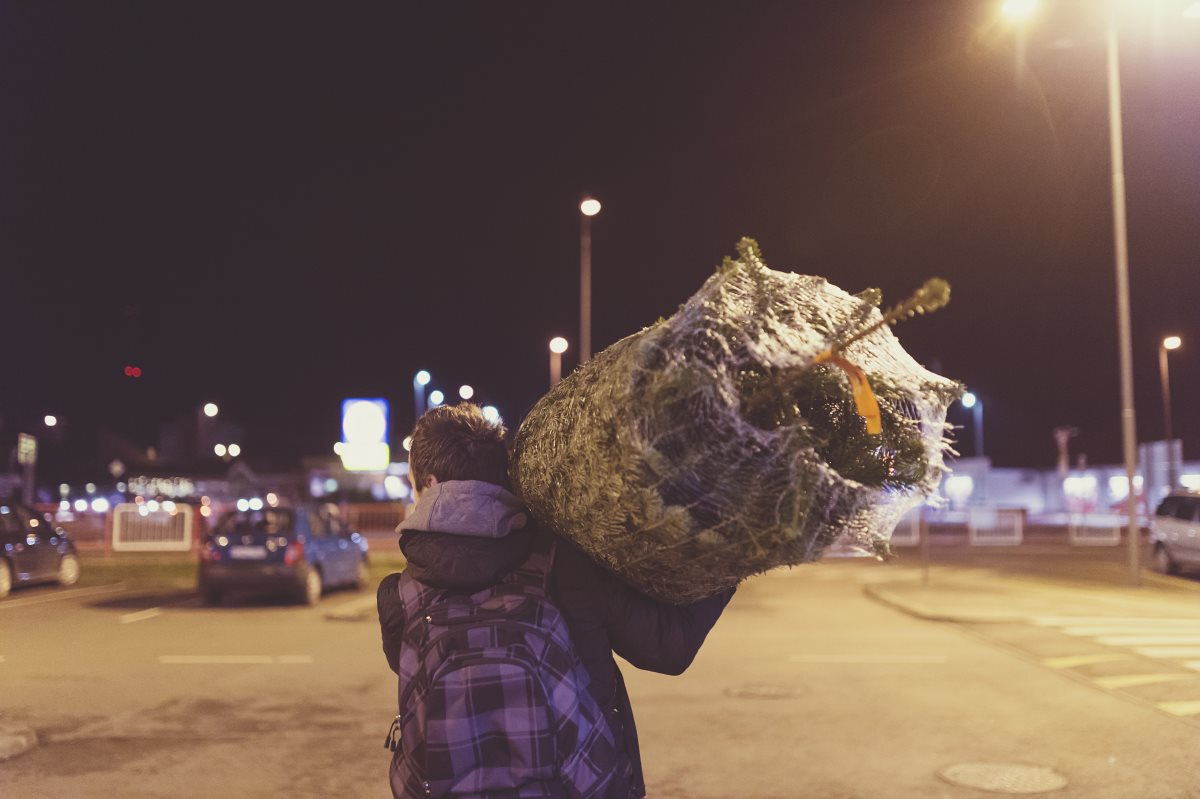 Man carrying Christmas tree home
