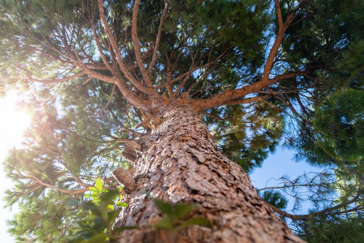 Stubs on tree trunk