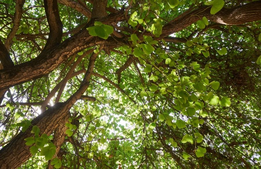 Bushy tree blocking light