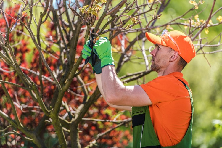 Man removing damaged branches