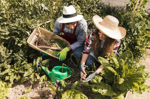 Man & Woman Gardening in Hats