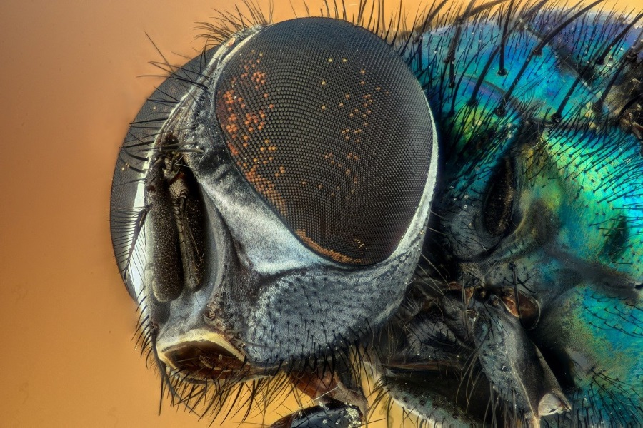 Close up of fly eye